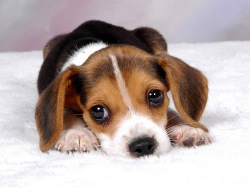 Een pup kopen?