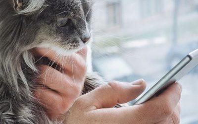 Videobellen met de dierenarts