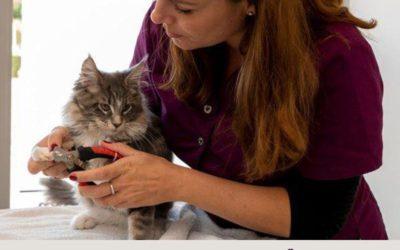 Nagels knippen bij je kat
